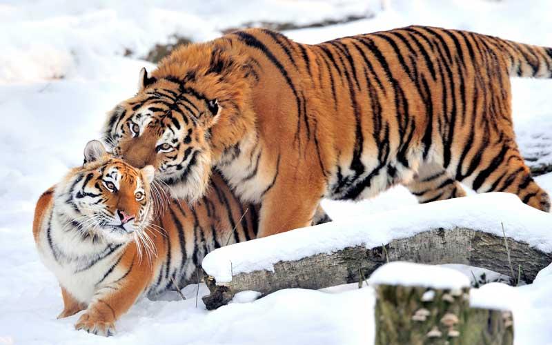 Comunicación de los Tigres