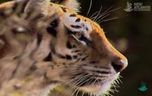 futuro_de_los_tigres