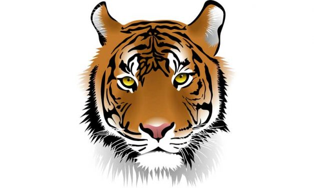 Tiger Facts for Kids