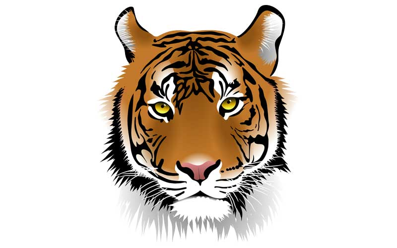 Tiger Facts For Kids Tiger Facts And Information